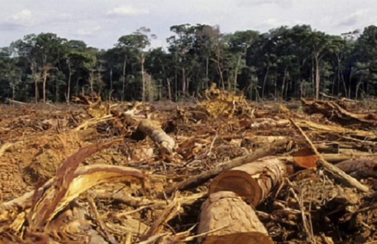 The deforestation disaster in Iran has been kept silent