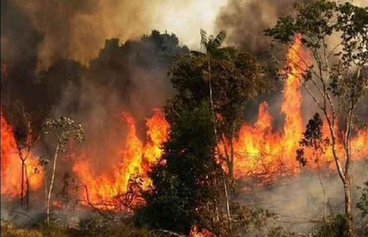 Iran forest fires