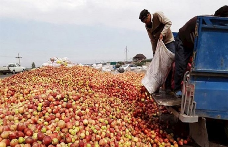 Iran's apple farmers throw out their crops because of the lack of market